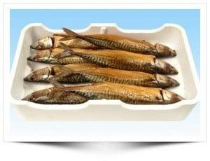 makreel zouten pekelen marineren