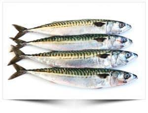 4 Makrelen